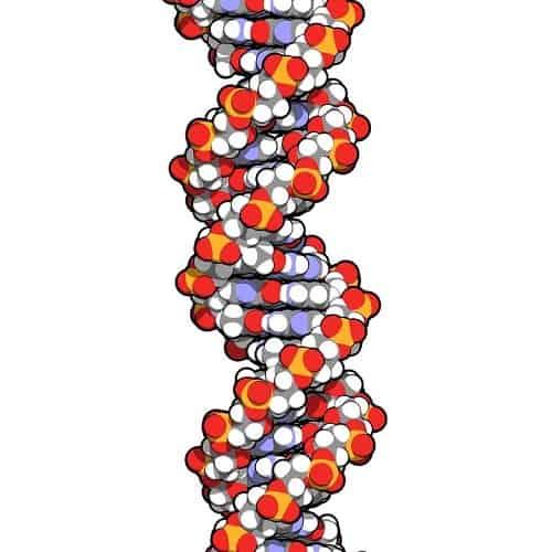 hyaluronzuur molecule
